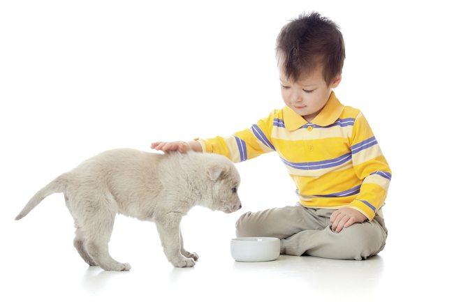 puppy-boy