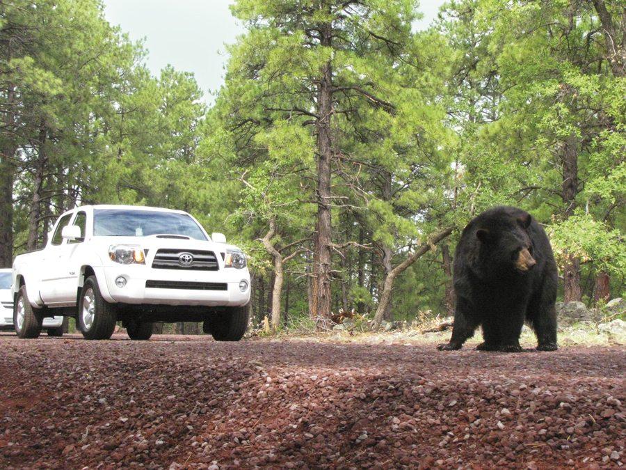 Courtesy of Bearizona Wildlife Park.