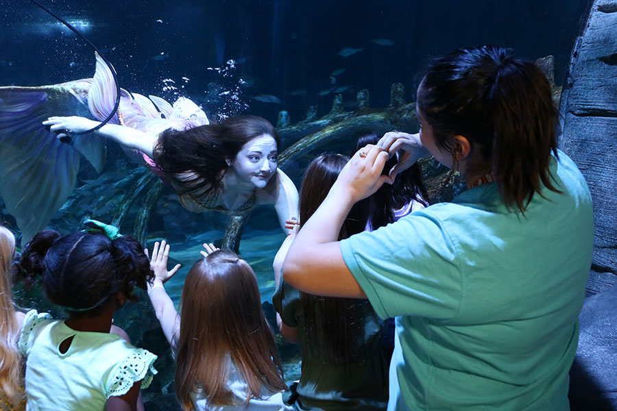 Meet a Mermaid at Sea Life Arizona
