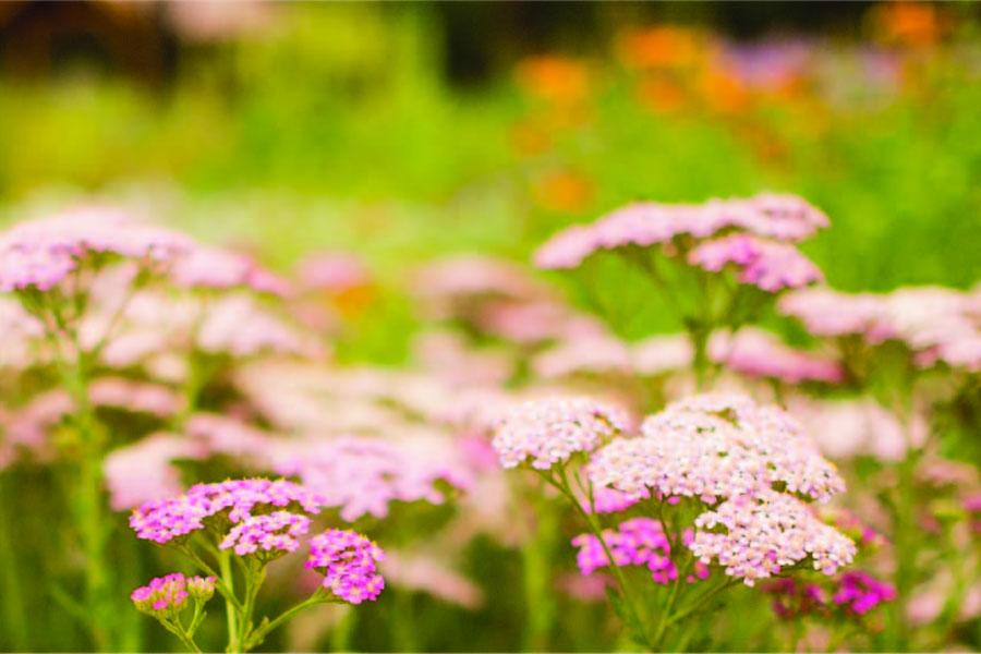 Wildflower Walks