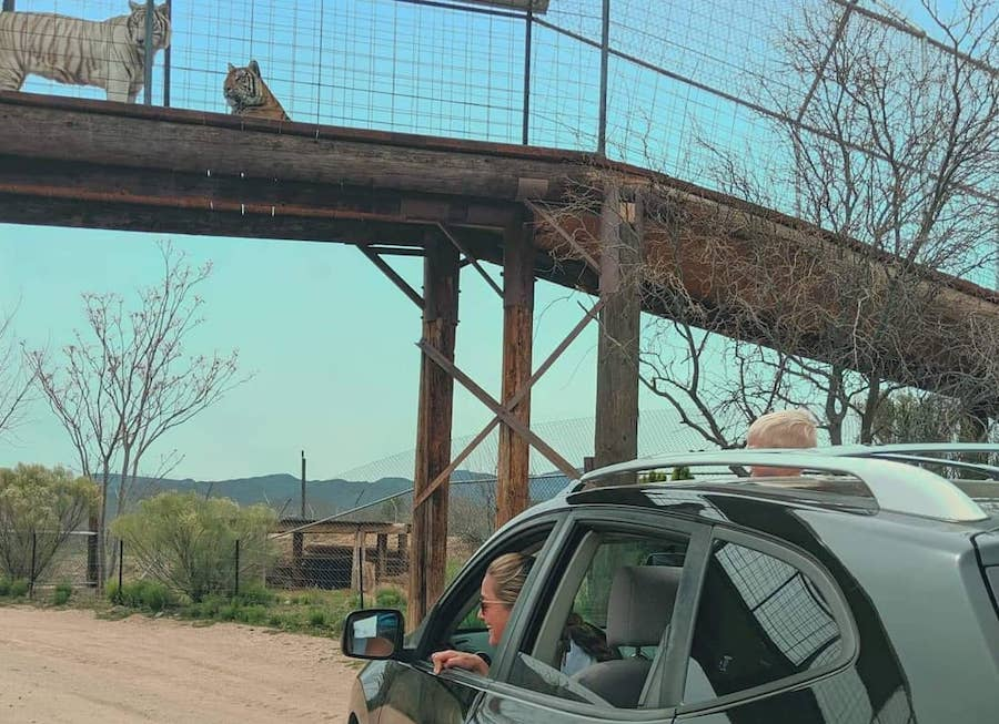 Out of Africa, drive-through