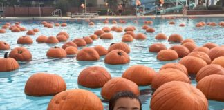 Mesa Pumpkin Splash, Halloween