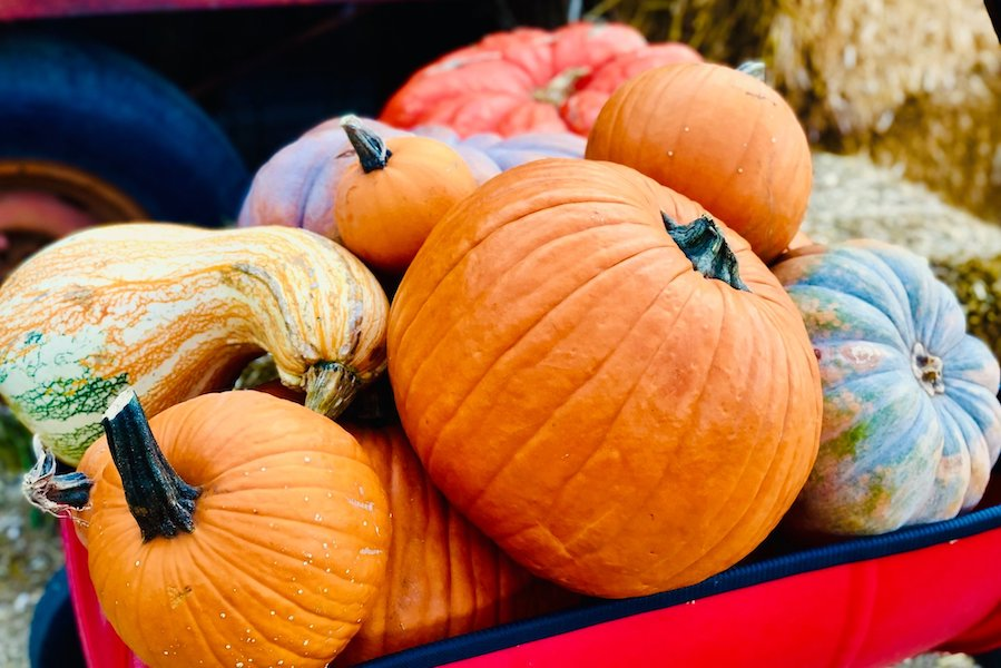 Vertuccio Farms, Corn Maze, fall festival, pumpkin patch
