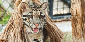 Wildlife World Zoo & Aquarium