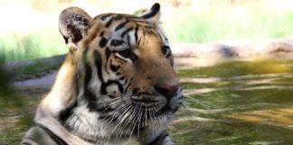 Wildlife World Zoo, Halloween, Spooktacular